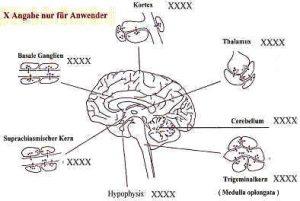 Gehirn_11