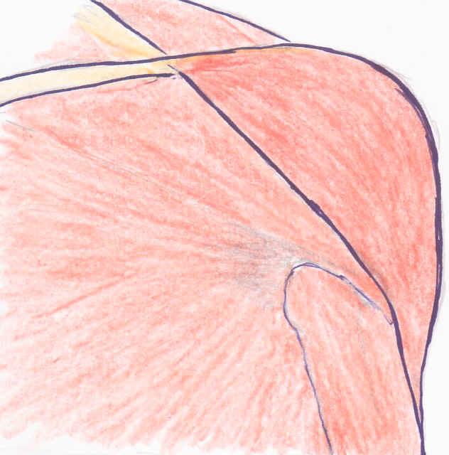 Schultermuskel_links_3